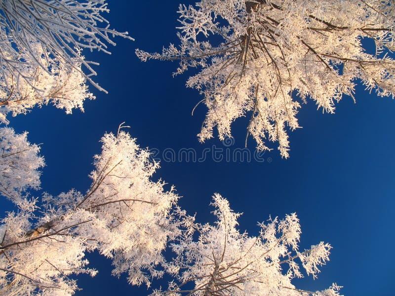 Cielo con los árboles glaciated fotografía de archivo