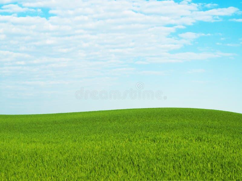 cielo de la hierba