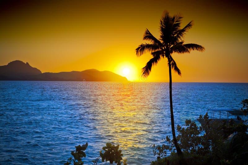 Cielo de la puesta del sol de la palmera del océano