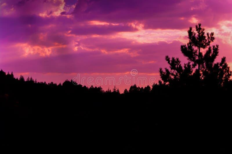 Cielo de la puesta del sol y foto rosáceos de las nubes en el bosque del pino imagen de archivo