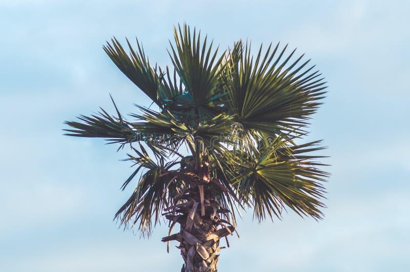 Cielo de las zonas tropicales de la palmera imagenes de archivo