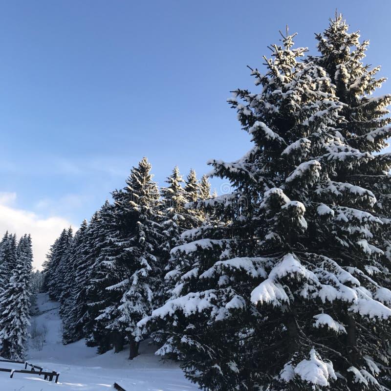 Cielo degli alberi della neve fotografia stock