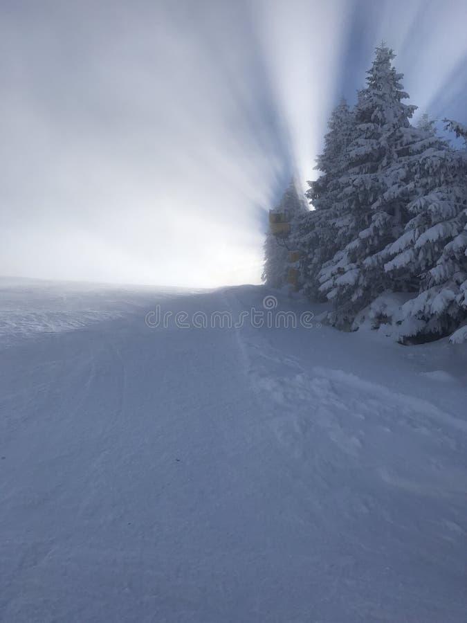 Cielo degli alberi della neve immagine stock