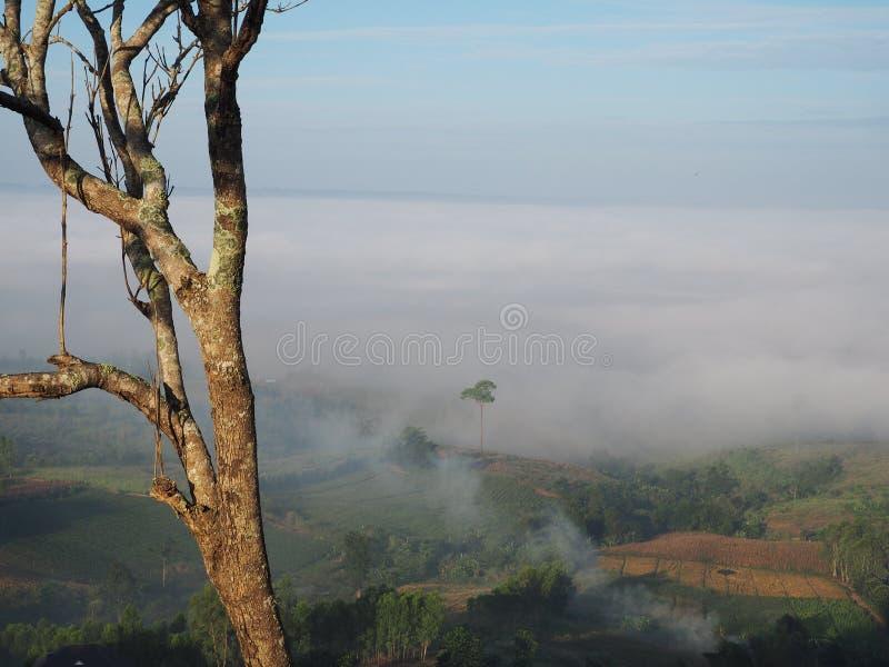 Cielo del árbol imagen de archivo