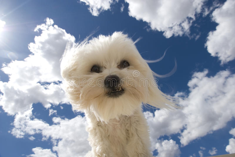 Cielo del cane immagine stock libera da diritti