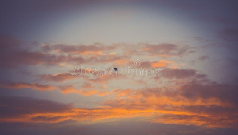 Cielo del falco pescatore di Vignetted di mattina fotografie stock