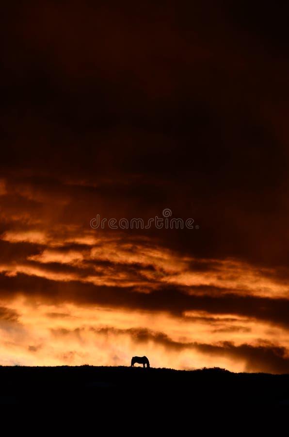 Cielo del fuego del caballo fotos de archivo