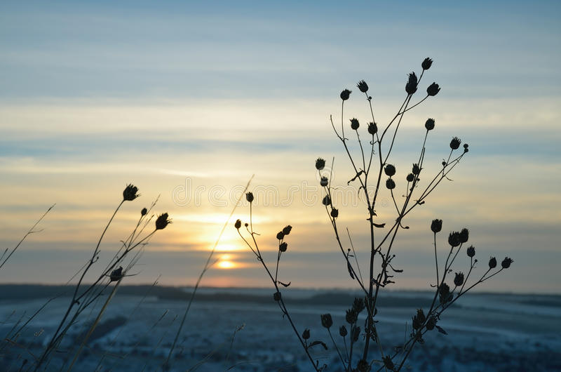 Cielo del invierno en la puesta del sol con la silueta del primer de la hierba foto de archivo