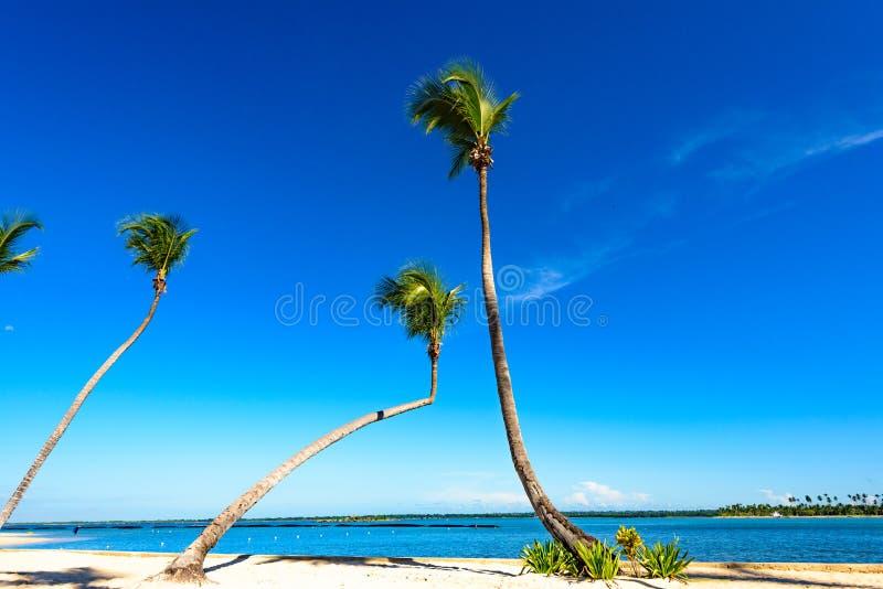Cielo del océano de la palma fotos de archivo