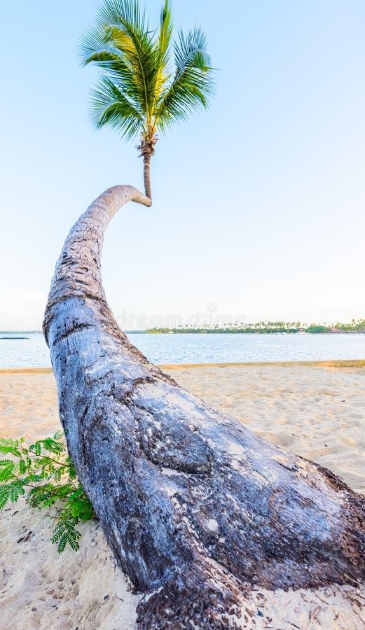 Cielo del océano de la palma imagen de archivo libre de regalías