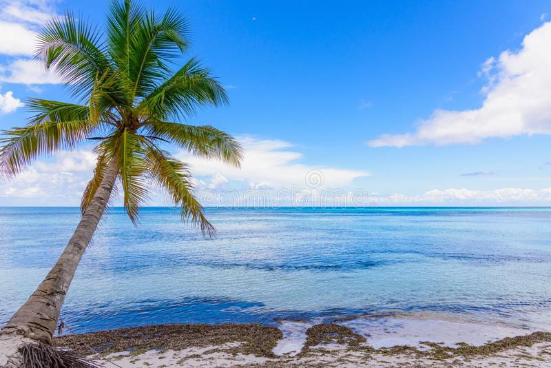Cielo del océano de la palma foto de archivo