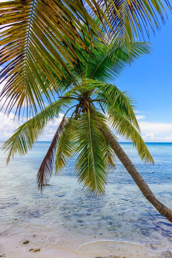 Cielo del océano de la palma fotografía de archivo libre de regalías