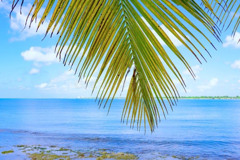 Cielo del océano de la palma imagenes de archivo