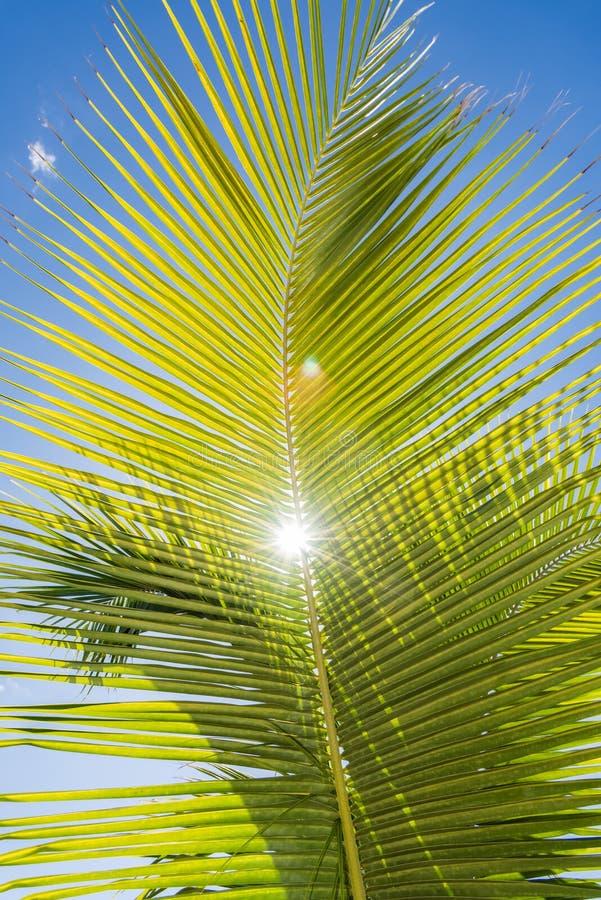 Cielo del océano de la palma foto de archivo libre de regalías