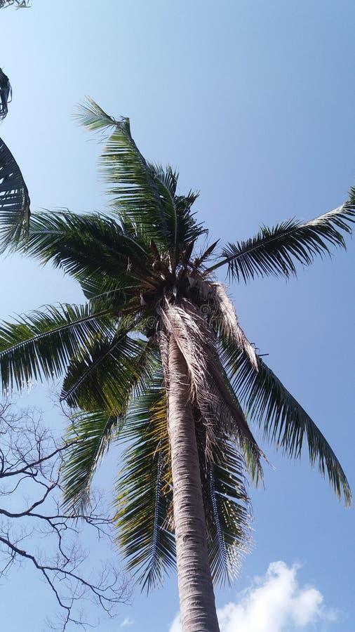 Cielo del pie del árbol de coco fotos de archivo