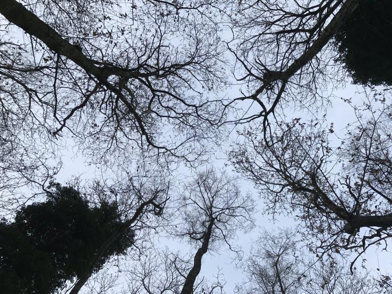 Cielo del ` s del árbol fotos de archivo libres de regalías