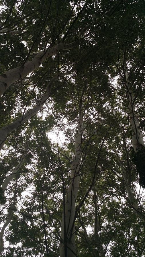 Cielo dell'albero immagine stock libera da diritti