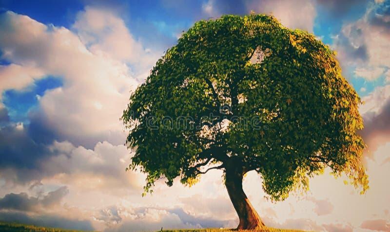 Cielo dell'albero dello shadowart della natura dell'albero fotografie stock