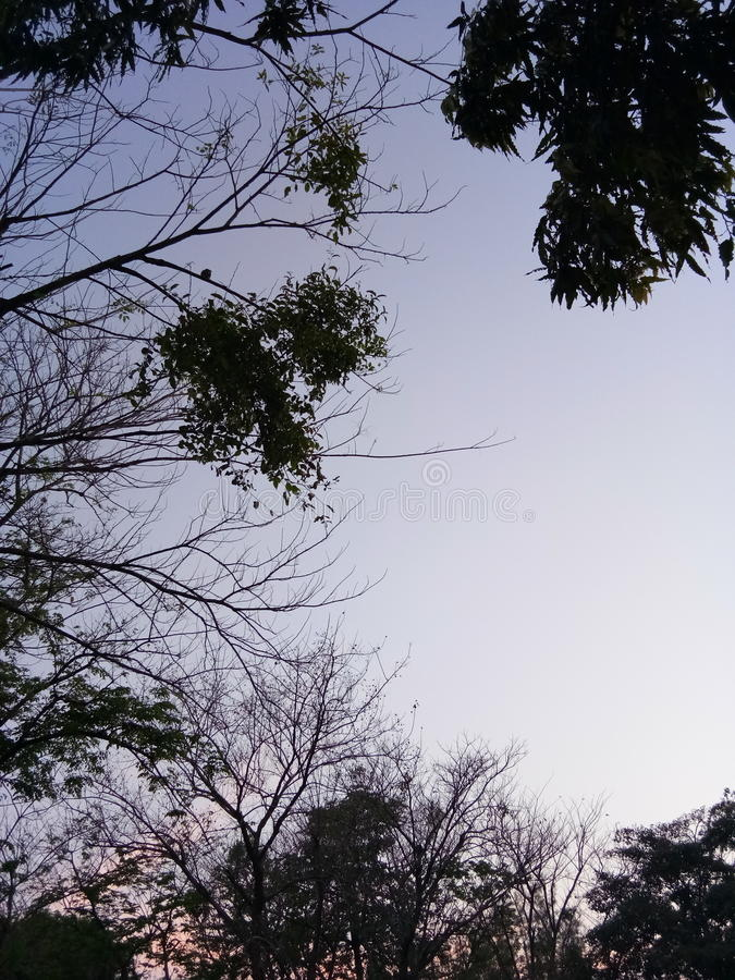 Cielo dell'albero di estate immagini stock libere da diritti