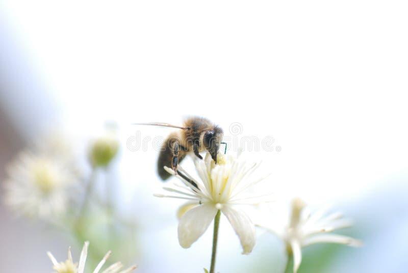 Cielo dell'ape fotografia stock libera da diritti