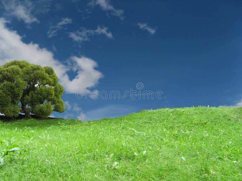 Cielo dell'erba dell'albero fotografie stock libere da diritti