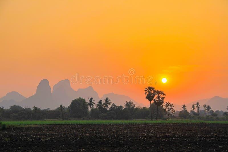 Cielo determinado de Sun con arroz verde imagen de archivo libre de regalías