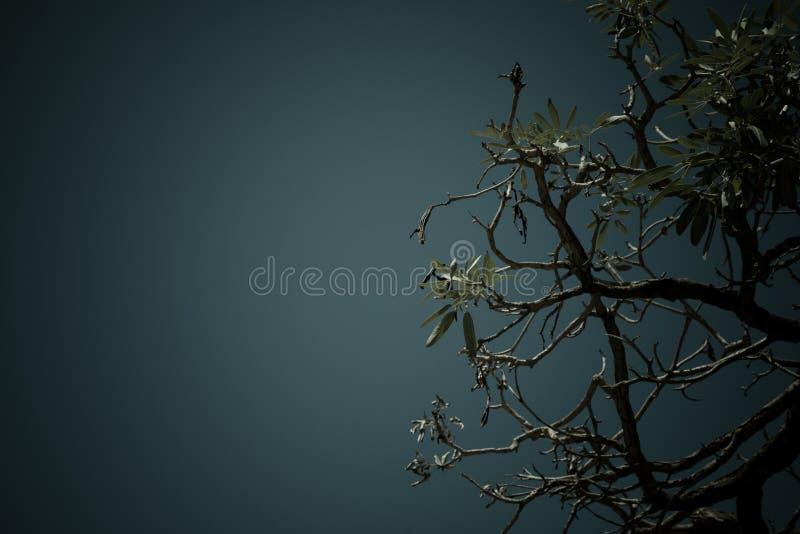 Cielo detrás del árbol fotografía de archivo