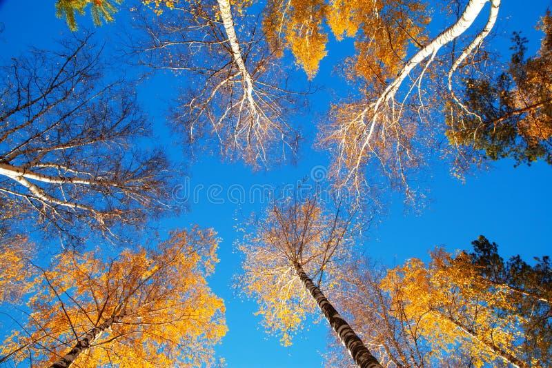 Cielo di autunno immagine stock libera da diritti