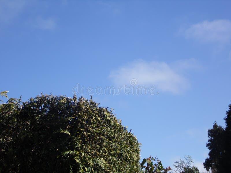 Cielo di Beautyful nell'isola del Madera fotografia stock