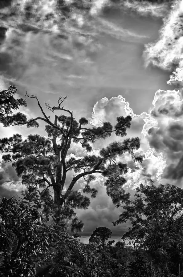 Cielo di estate di Florida fotografia stock libera da diritti