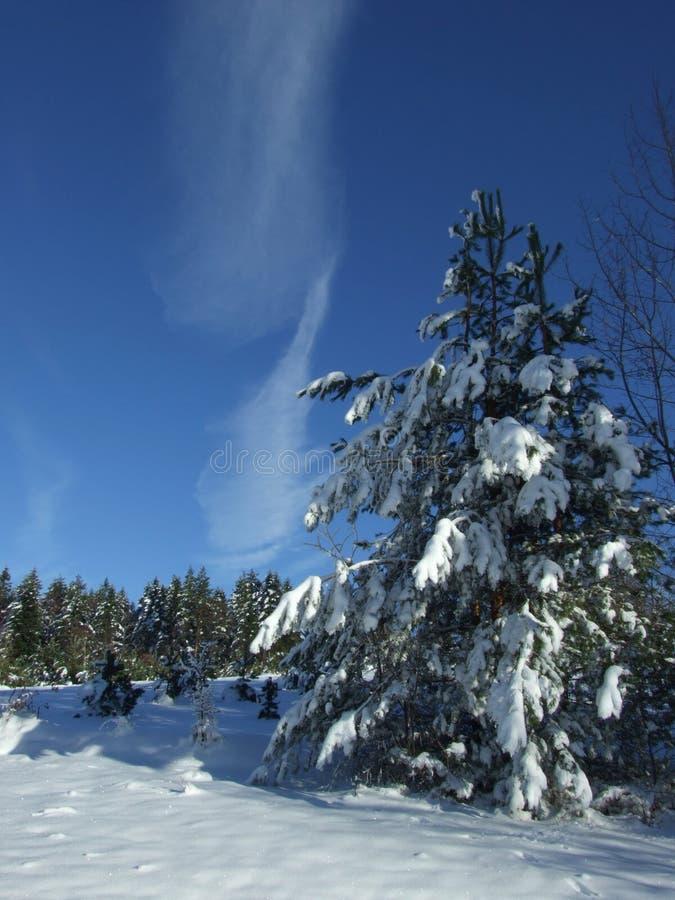 Download Cielo di inverno immagine stock. Immagine di tonalità - 3894851