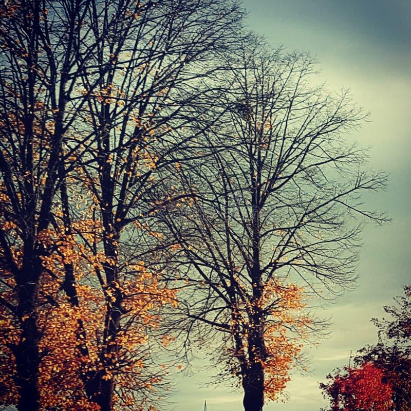 Cielo di inverno della natura dell'albero immagine stock