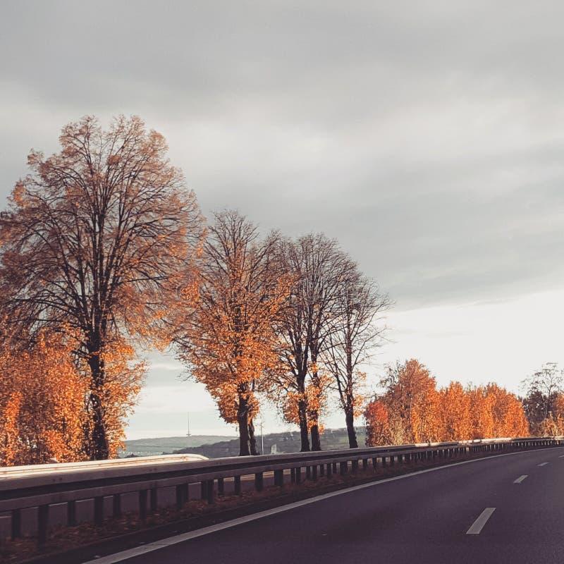Cielo di orario invernale dell'albero della strada immagini stock libere da diritti