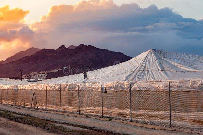Cielo dramático España del invernadero plástico industrial foto de archivo