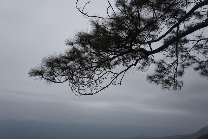 Cielo e foresta pluviale tropicale nella stagione dei monsoni immagini stock