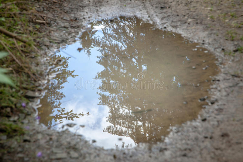 Cielo e sempreverdi di riflessione della pozza di fango fotografia stock
