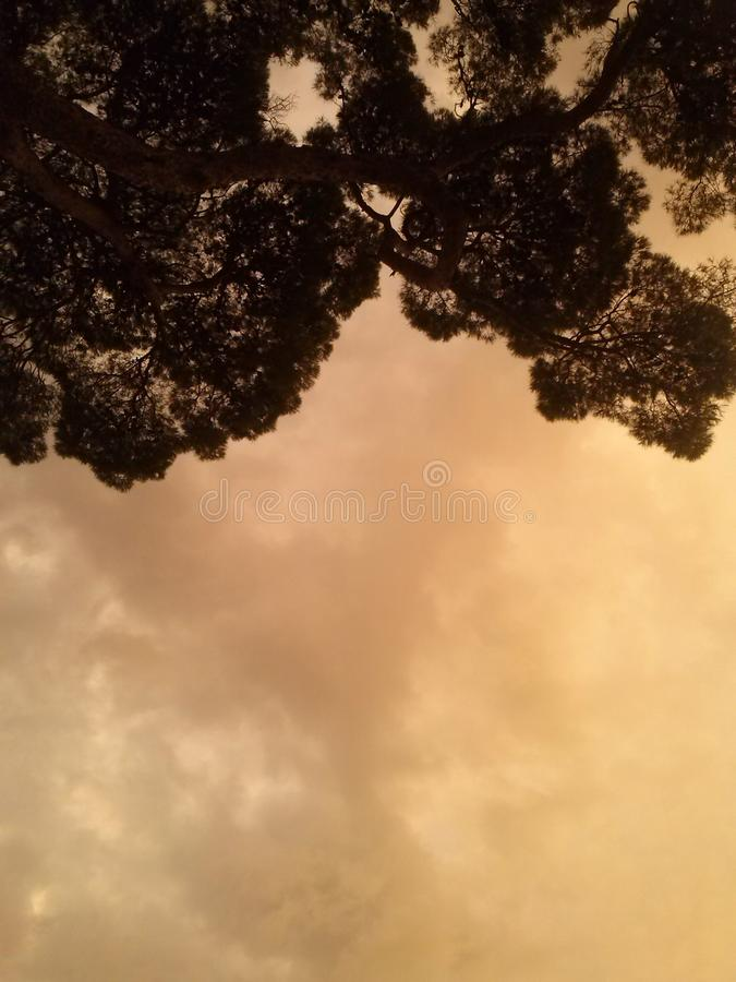 Cielo ed albero immagini stock libere da diritti