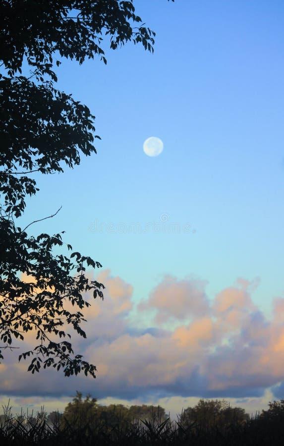 Cielo en la oscuridad con la Luna Llena y el árbol abajo del lado izquierdo foto de archivo