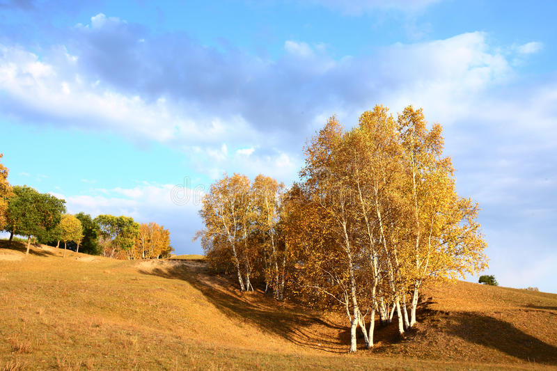 Árboles del otoño en prado imagenes de archivo