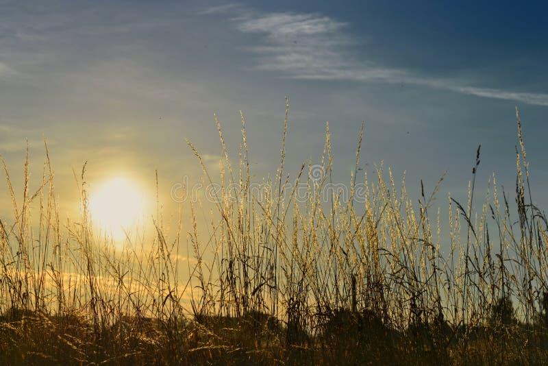 cielo en la puesta del sol detrás de la hierba salvaje fotografía de archivo