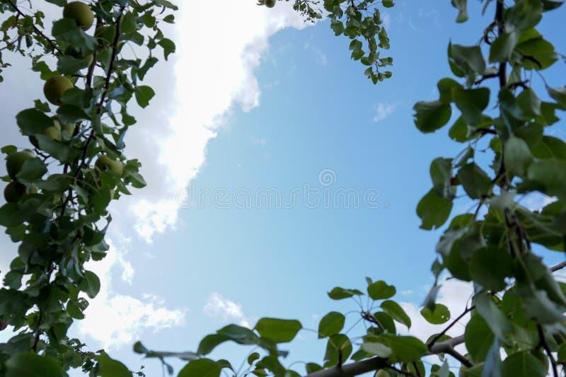 Cielo enmarcado por sucursales de Apple imagen de archivo libre de regalías