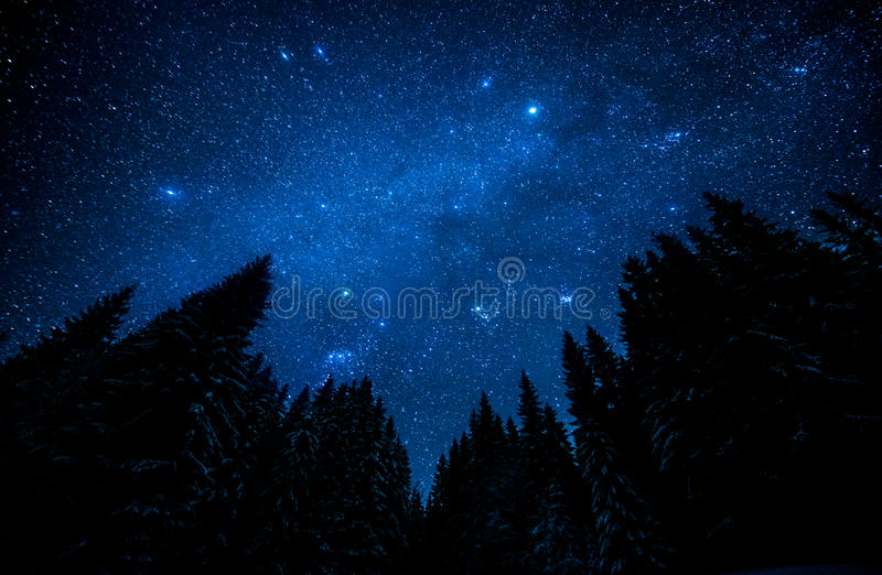 Cielo estrellado en el bosque de la noche imagen de archivo libre de regalías