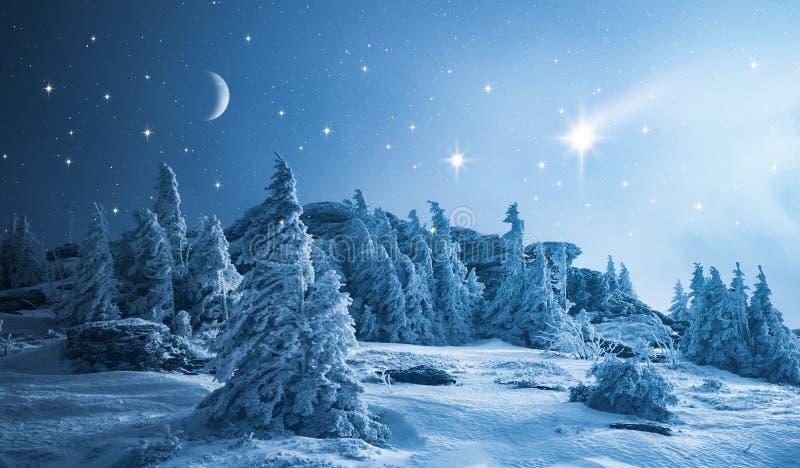 Cielo estrellado sobre bosque del invierno foto de archivo