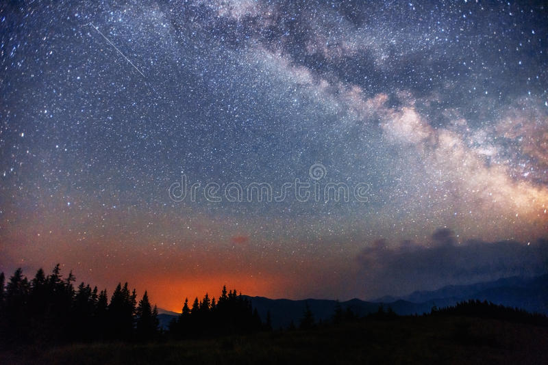 Cielo estrellado a través de los árboles imagen de archivo