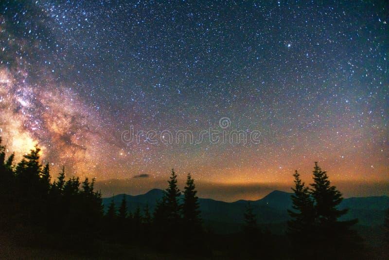 Cielo estrellado a través de los árboles fotografía de archivo libre de regalías
