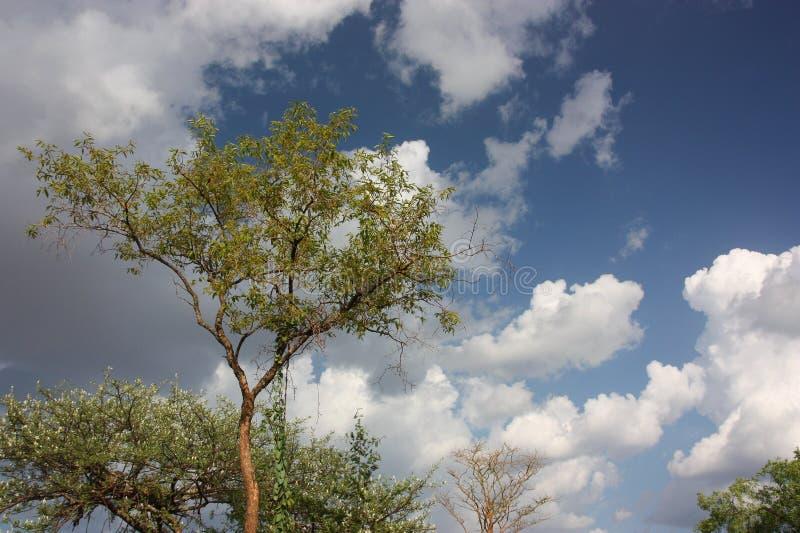 Cielo etiopico fotografia stock