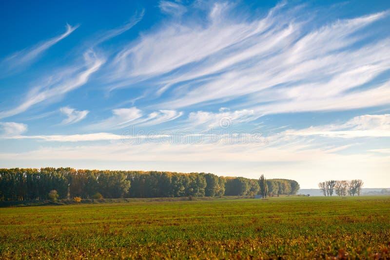 Cielo hermoso, campo y bosque adentro lejos en la estación del otoño, luz del sol brillante y nubes de cirro foto de archivo