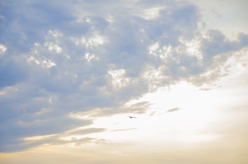 Cielo hermoso de la puesta del sol con el azul y colores oro foto de archivo
