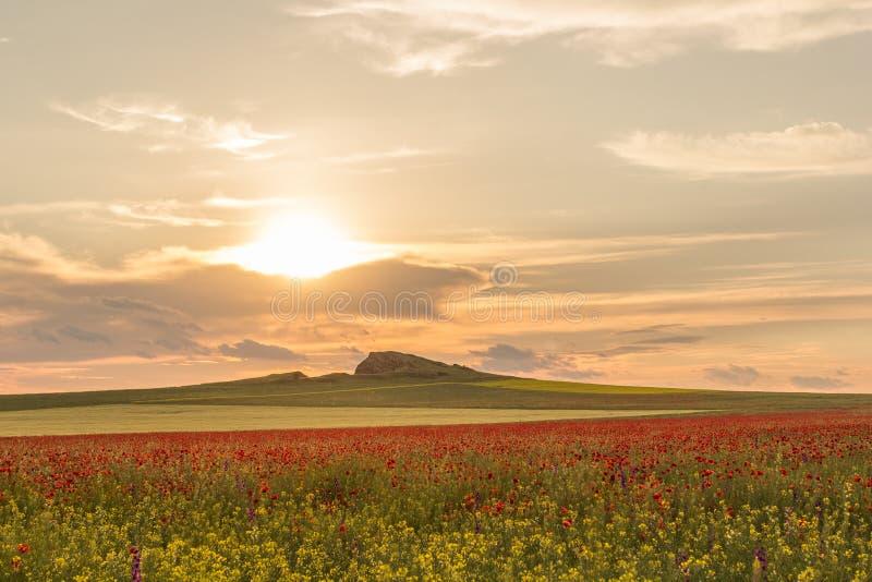 Cielo hermoso de la puesta del sol con las nubes blancas sobre un campo verde del verano con las amapolas fotos de archivo