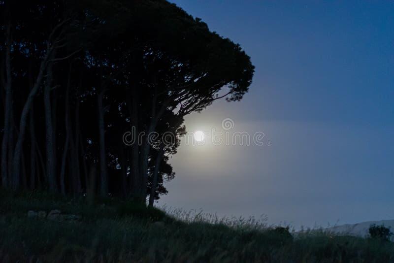 Cielo nocturno bajo luz de luna imagen de archivo libre de regalías